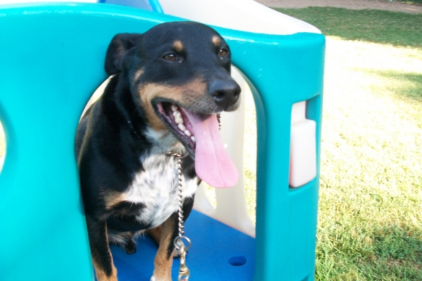 Dog Day Care Mound, Minnetrista, Minnesota, Oak Ridge Pet Boarding